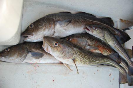 Świeża ryba w Kołobrzegu